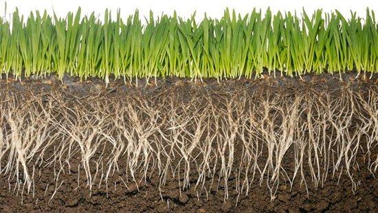 Healthy Soil Aerator